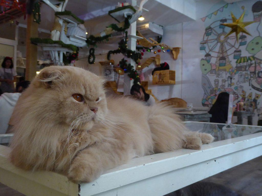 Caturday Cat Cafe in Bangkok