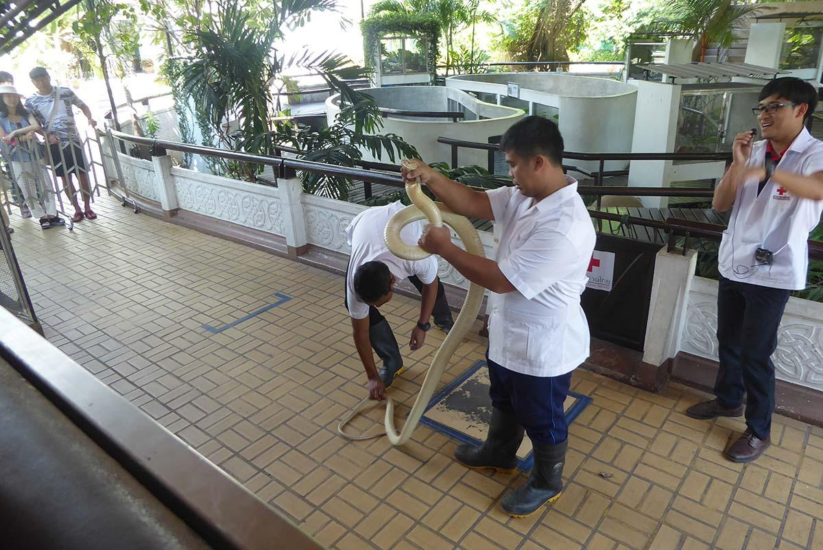 The Snake Farm (Queen Saovabha Memorial Institute) Bangkok