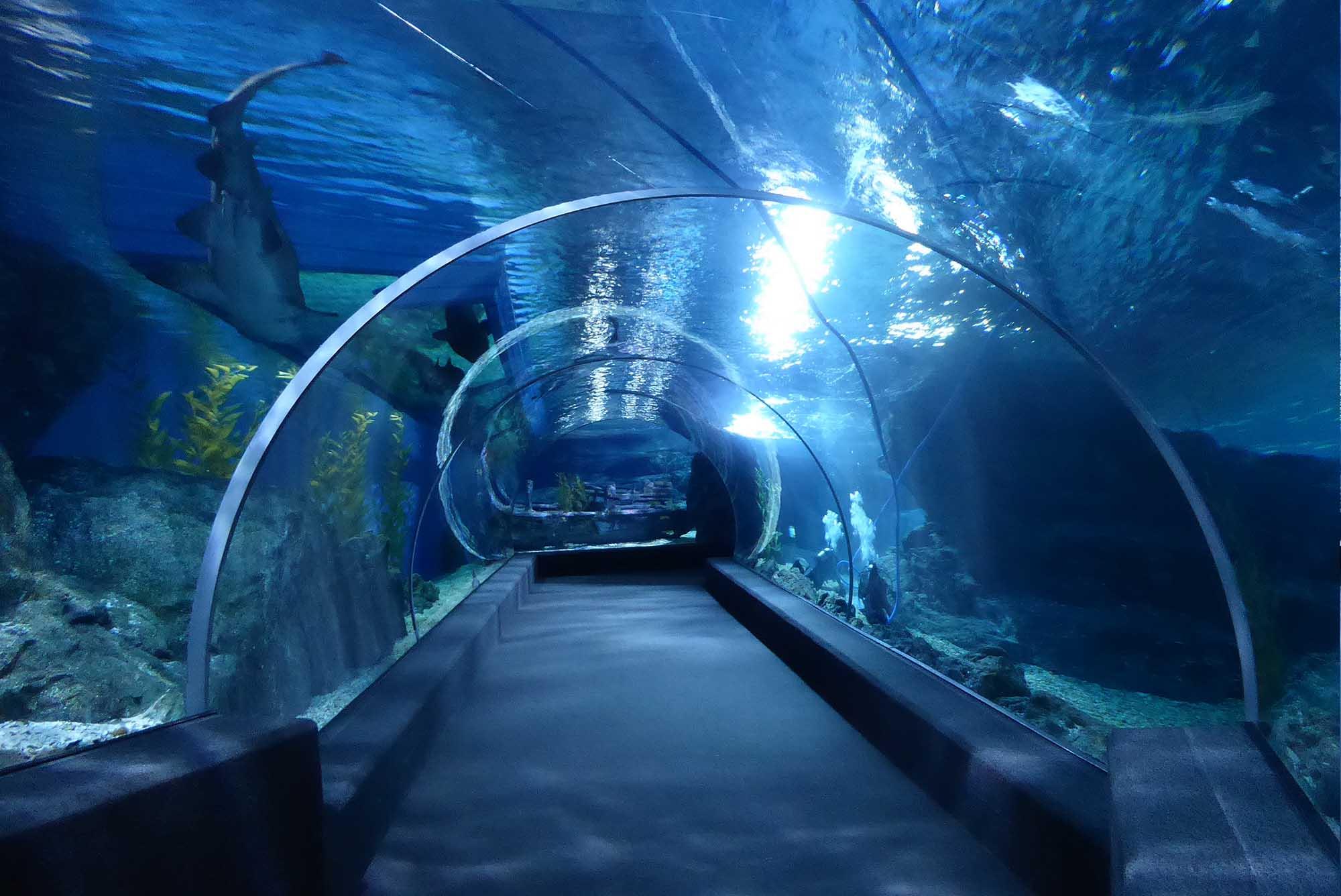 Bangkok Zoo & Animal Parks