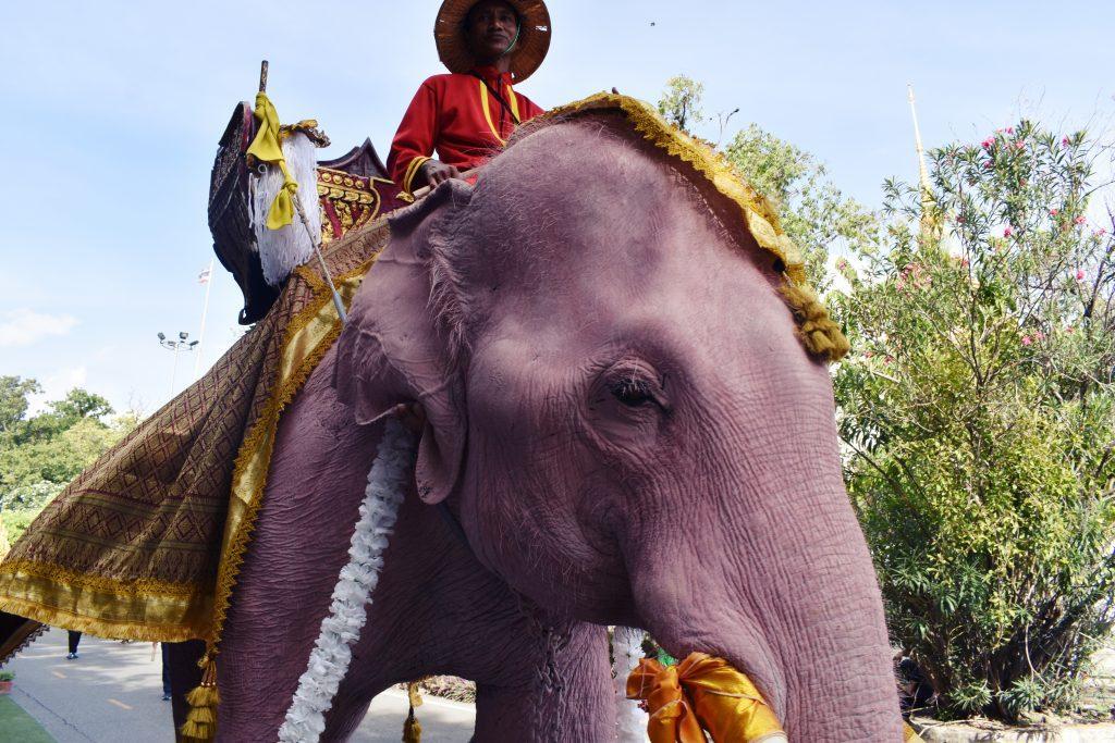 Thai Pink Elephants