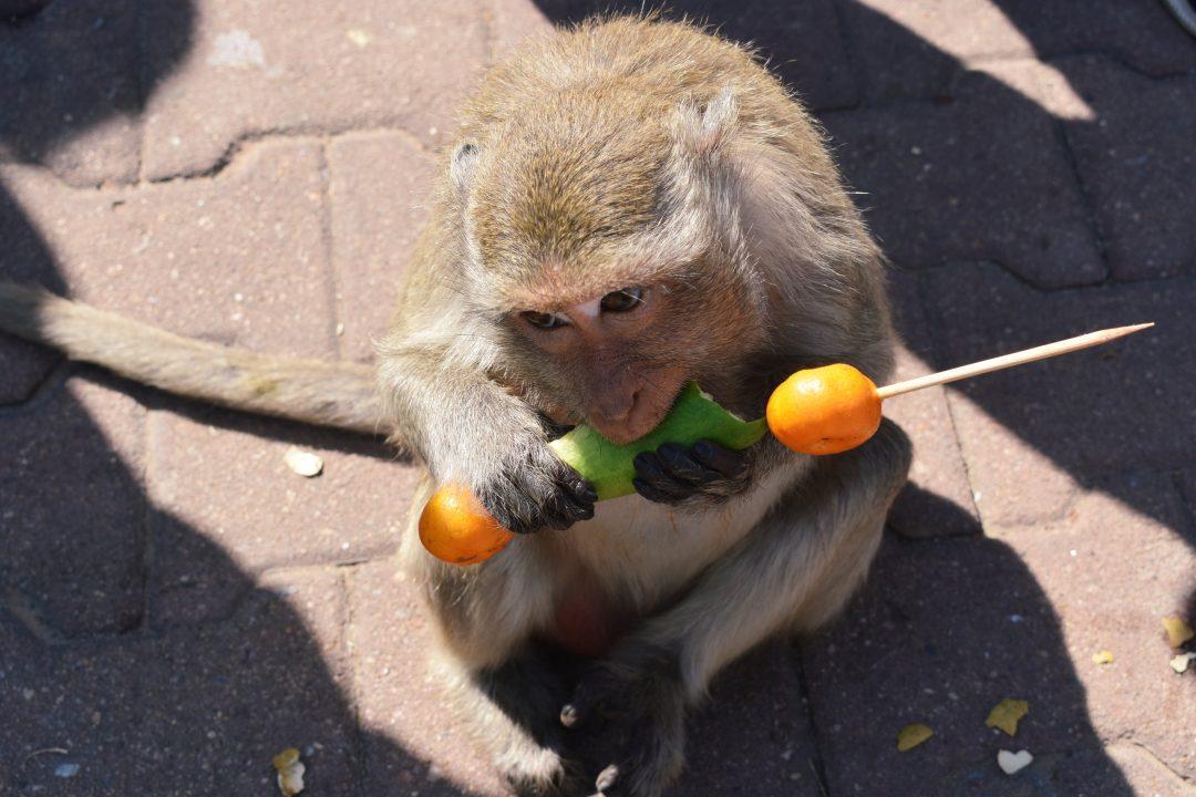 Lopburi Monkey Party 2019